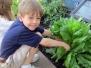 Primary Gardeners